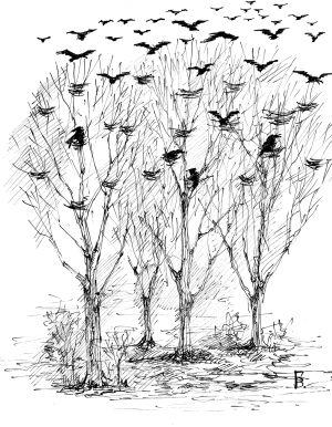 брачные отношения у птиц