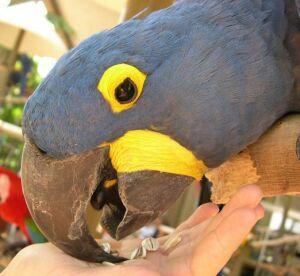 Попугаи: виды домашних попугайчиков, как выбрать и сколько 4