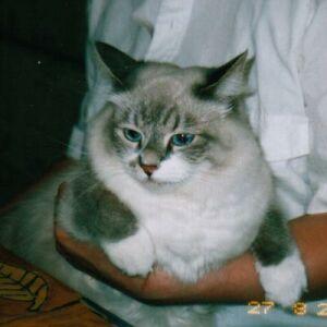 Международная выставка кошек WCF