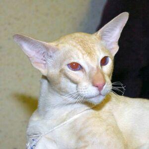 Международная выставка кошек КЛК Бастет