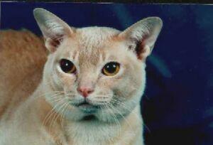 115-я международная выставка кошек