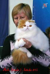 Супер шоу кошек Кубок Hill's
