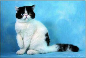 Международный беби-салон, организатор - клуб любителей кошек Эйлур