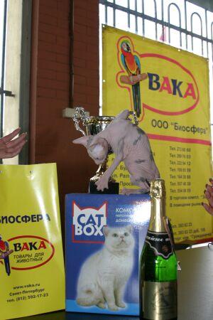 выставка кошек Кошки Белых Ночей