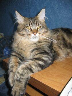 Выставка кошек всех пород Bastet