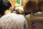 Диспансеризация кошек Эрмитажа