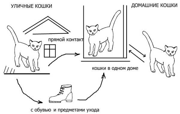 заболевание кошек.