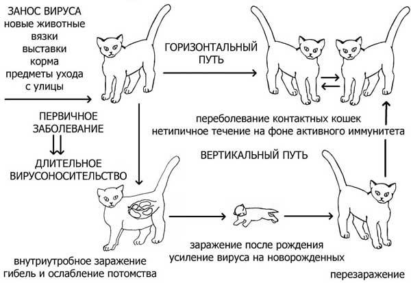 только породистых кошек,