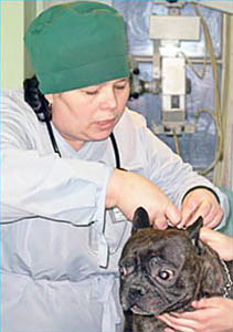 Институт Ветеринарной Биологии