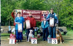Чемпионат Санкт-Петербурга по аджилити