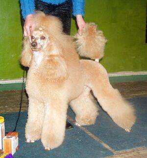 выставка собак Весна-2004