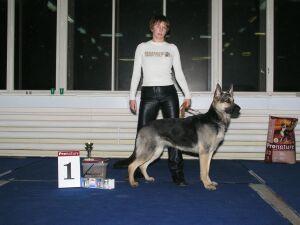 Выставка собак Невская Рапсодия