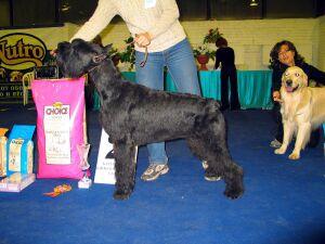 выставка собак Кубок Санкт-Петербурга