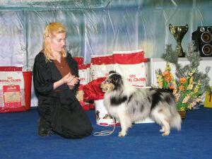 выставка собак Невский Победитель