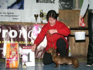 выставка собак Кубок  Асконы