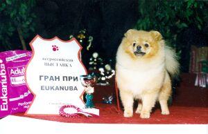 Выставка  собак Гран При Eukanuba