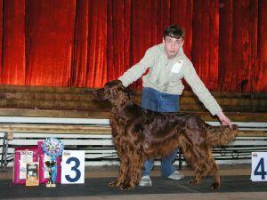 выставка собак всех пород Зимняя сказка
