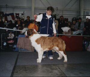 выставка собак всех пород  Евразия-2005