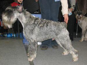 """международная выставка собак всех пород """"Евразия-2005"""""""