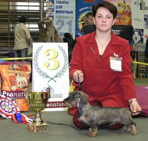 выставка собак Гран-при Весенний Петербург