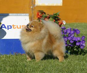 выставка собак Aptus Show, Хельсинки