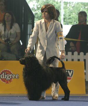 Международная выставка собак в Тульне