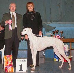 Выставка собак Петербургский вернисаж