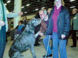выставка собак Amsterdam Winner