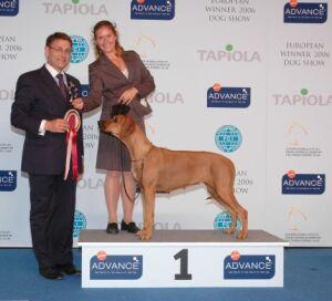 Международная выставка собак European Winner