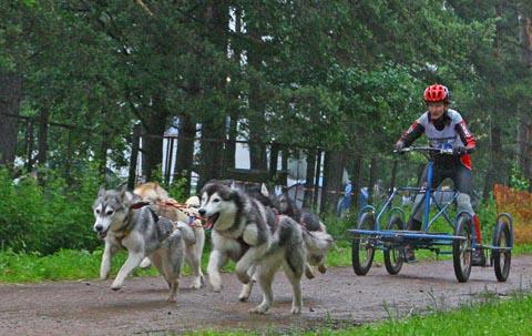 Двухэтапная гонка с участием собак «Белые ночи 2009