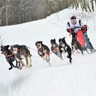 Собаки ездовой спорт