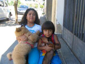 Домашние животные Бразилии