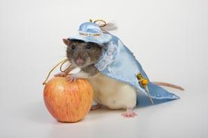 крыса в костюме