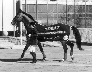 """выставка """"Коневодство. Конный спорт"""""""