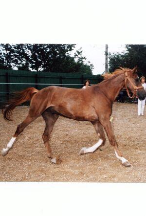 Лошадь на корде