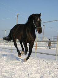 зимняя ковка