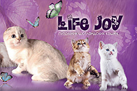 LifeJoy