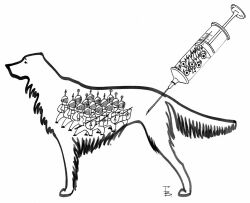 Активная иммунизация собаки (введение вакцины)