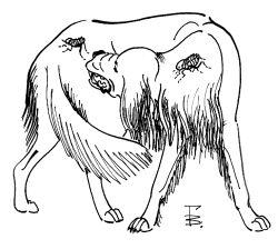 блохи и клещи у собак и кошек